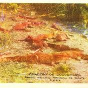 Гуама, крокодилий питомний