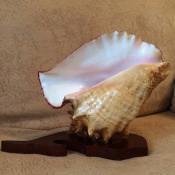 Ракушка-развертка на подставке в форме дельфина. Вид 1