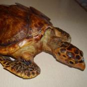 Морская черепашка, фото 1