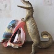 Крокодильчик-кайман