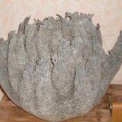Морская губка, фото 1