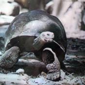 Американская черепаха. Национальный зоопарк