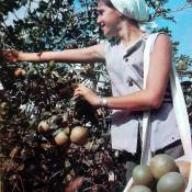 Сельхозработа. Школа в поле