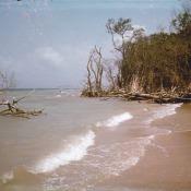 Пляж на острове, куда ездили купаться. Называли это одним словом «Барка». 1977 год.