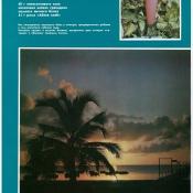 http://cubanos.ru/_data/gallery/foto044/thumbs/thumbs_kt07.jpg