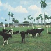 http://cubanos.ru/_data/gallery/foto062/thumbs/thumbs_bl12.jpg