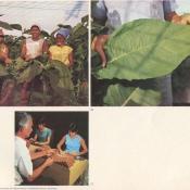 http://cubanos.ru/_data/gallery/foto062/thumbs/thumbs_bl17.jpg