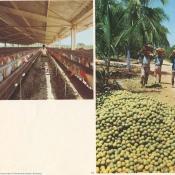 22. Granja avicola en Ariguanabo; 23. Recolecta de naranjas.