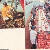 http://cubanos.ru/_data/gallery/foto062/thumbs/thumbs_bl32.jpg