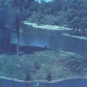 1968-1970. Зоопарк, обезьяний остров, фото 1