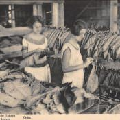 1910 год. Нанизывая табачные листья.