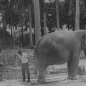 В Гаванском зоопарке, фото 2