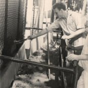 «В Гаванском зоопарке»