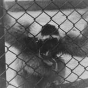 1964. В Гаванском зоопарке, фото 5