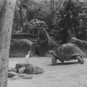 1964. В Гаванском зоопарке, фото 8
