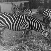 1964. В Гаванском зоопарке, фото 12