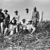 Советские специалисты помогают кубинцам: уборка сахарного тростника, фото 4