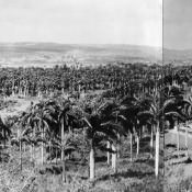 Панорамный снимок Моа: слева-направо, 4 из 7