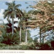 Весна в центральном парке Гаваны