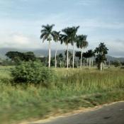 http://cubanos.ru/_data/gallery/foto093/thumbs/thumbs_zl09.jpg