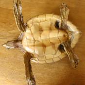 Черепашка, набивная, фото 8