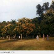 Манговый сад, 1976