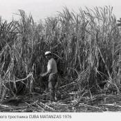 Поле сахарного тростника, Матансас, 1976