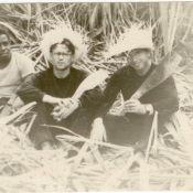 Шарапов Виктор Фролович (справа) и Сероносов Константин (в центре, в очках) на плантации сахарного тростника. Республика Куба. 1961-1962 гг.