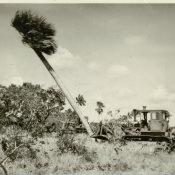 Расчистка территории от деревьев в Республике Куба. 1961 г.