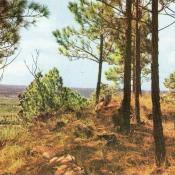 Отрытка №4. Национальный парк.