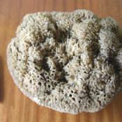 Морская губка, фото 2