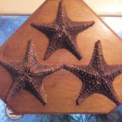 305. Три морских звезды на подставке