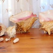 Морские ракушки, караколы