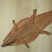Шкура крокодила (каймана), вид сверху