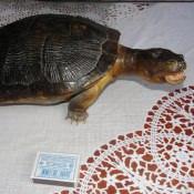 Морская черепаха, 1 ракурс