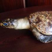 066. Морская черепаха