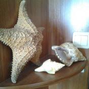 Морская коллекция. Снимок 4