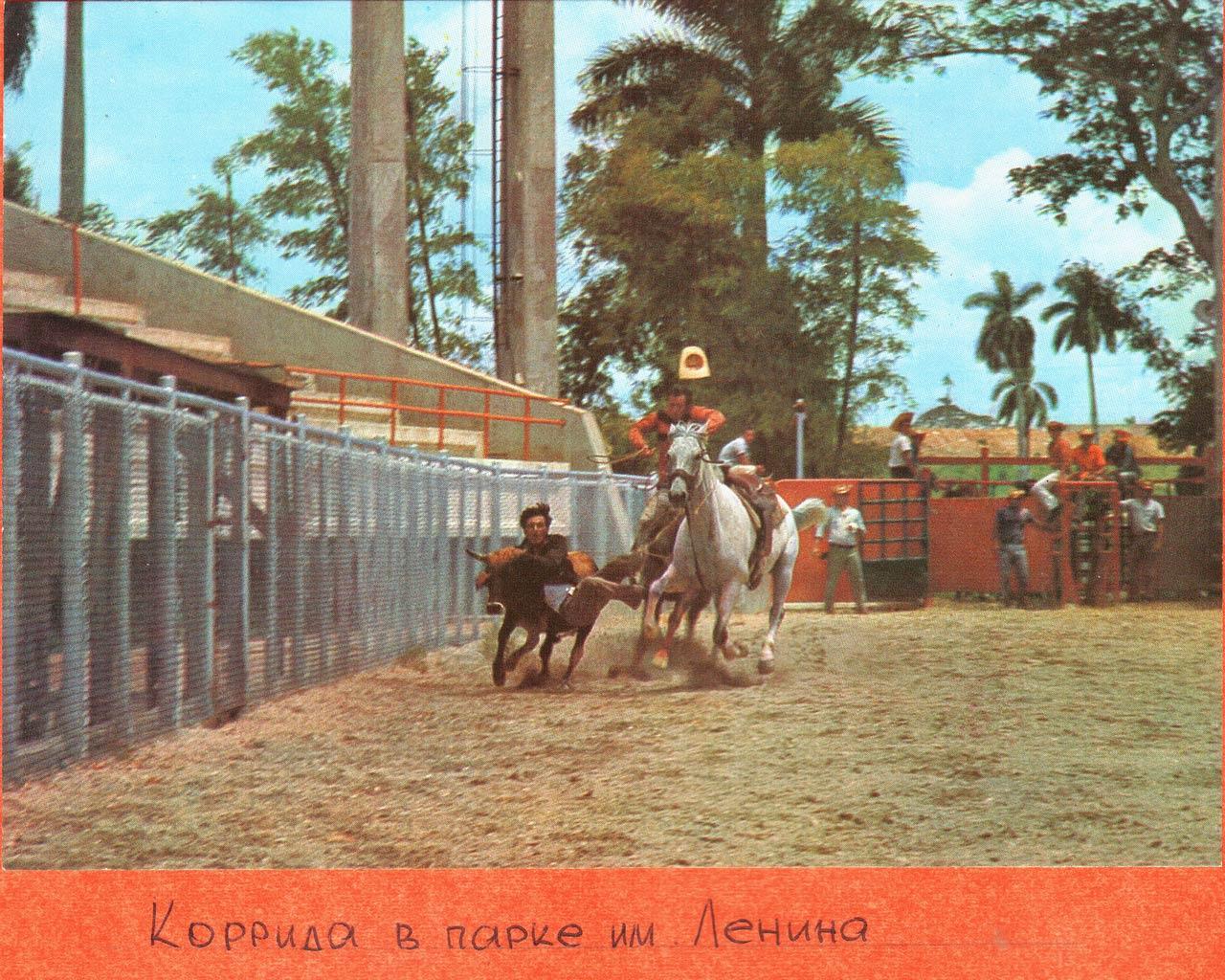 Коррида в парке им. Ленина