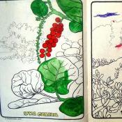 Стр. 6-7. «uva сaleta» (морской виноград) и «triantoma» (?)