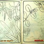 Стр. 12-13. «lirio de costa» (береговая лилия) и «pataban» (?)