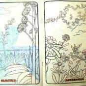 Стр. 16-17. «maguey» (агава) и «astaracea» (?)