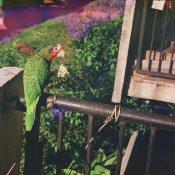 06. 1982. Фото 05. Перико – живой сувенир с Кубы