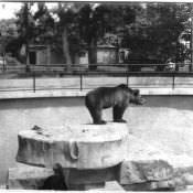 Гаванский зоопарк