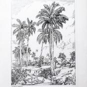 186. Кубинский пейзаж; открытка 80-х годов.