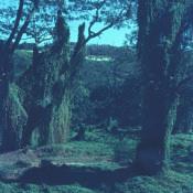 1968-1970. Парк Rio Cristal (Кристальная река), фото 4