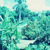 1968-1970. Парк Rio Cristal (Кристальная река), фото 7
