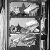 031. 1987-1989. Сувениры, собранные на Кубе