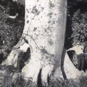 1965-1967. У дерева неподалёку от приёмного центра