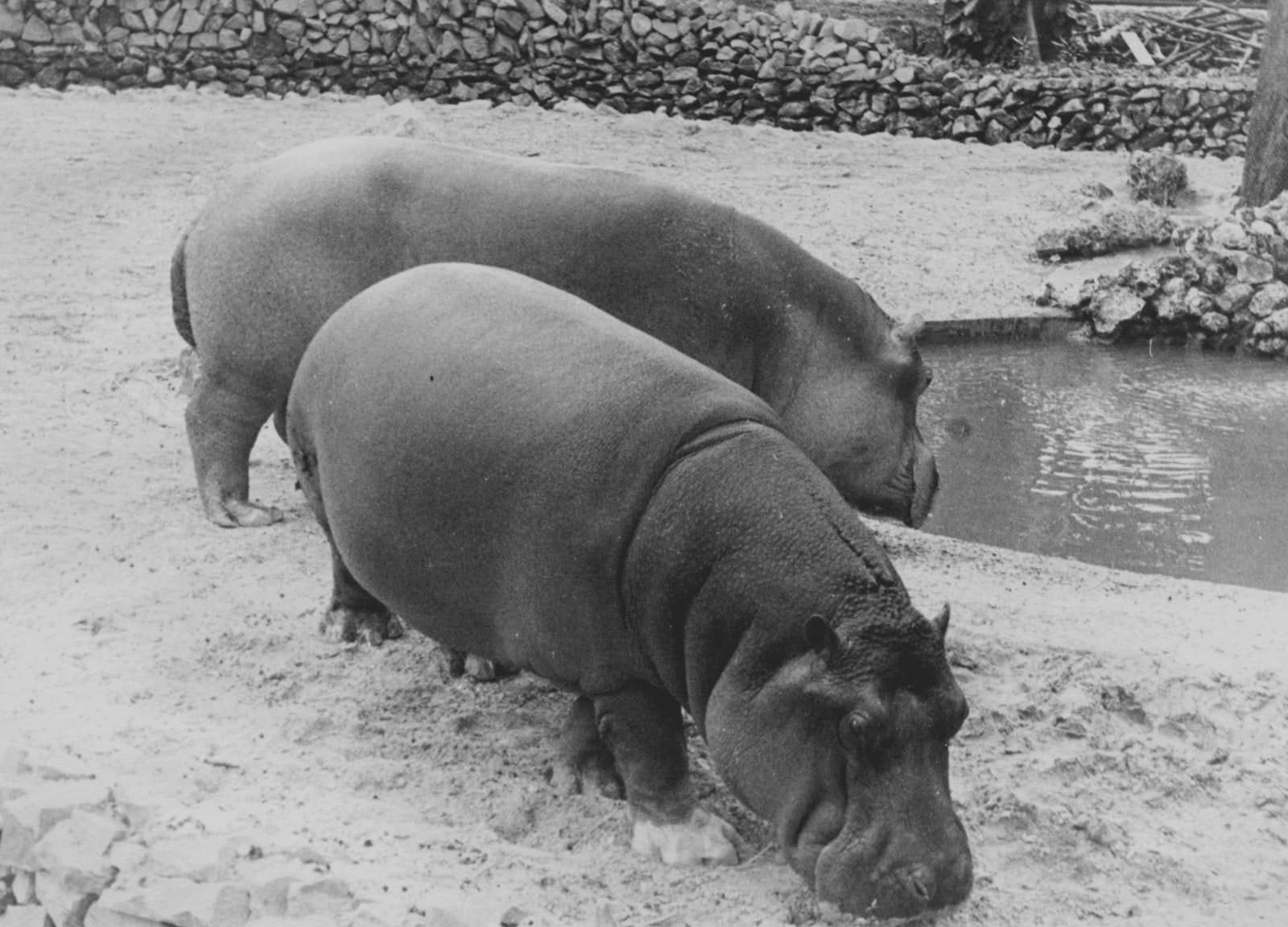 1964. В Гаванском зоопарке, фото 11