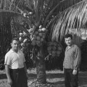 Март 1964. У кокосовой пальмы